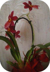 IMGP00351-207x300 dans orchidées